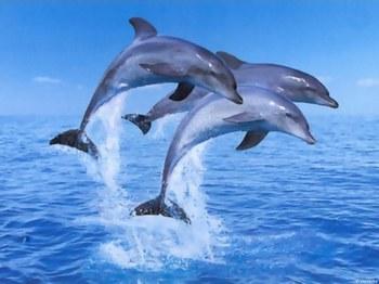 dofin.jpg